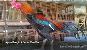 Ayam Bangkok Super Dan KW