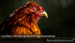 Cara Main Judi Sabung Ayam Hingga Keseruannya